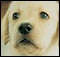 Ubisoft anuncia Cachorros 3D para Nintendo 3DS