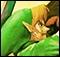 Pocas unidades de Zelda: Ocarina of Time 3D en Jap�n