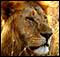Aventura y fotograf�a con African Safari